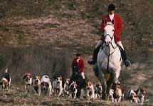 Photo Gallery - Fox Hunt (Click image to open gallery)